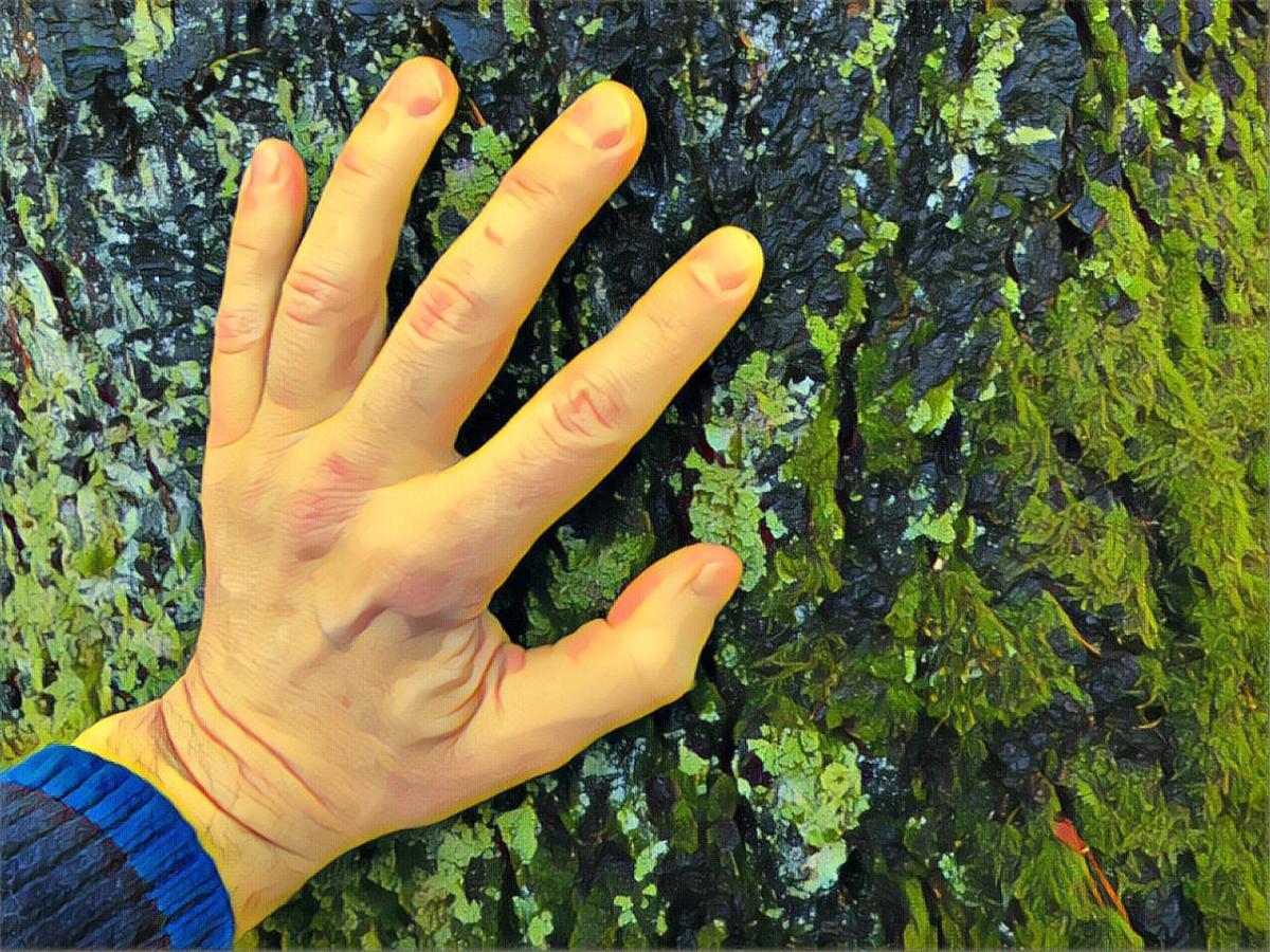 Ta på trærne i skogen - Bruk hendene til å sanse naturen - mindfulness - natur - skog - Puste ut